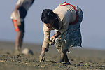 Rakhine woman gathering clams.She is probing holes with her finger. Subsistence hunting pressure is intense on both marine and terrestrial wildlife in the region. All coastal bird species are extremely wary of humans. Rakhine State, Maynmar. January.