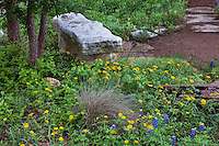 Stone bench in wildflower meadow garden with Ranunculus macranthus Large Buttercup flowers, lupines and Muhlenbergia reverchonii, Seep Muhly grass, at the Texas Lady Bird Johnson Wildflower Center