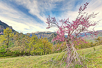 A unique tree near Kastania in Aspropotamos, Greece.