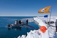 bowhead whale, Balaena mysticetus, caught by a whaling crew during spring whaling season, Chukchi Sea, Arctic Alaska