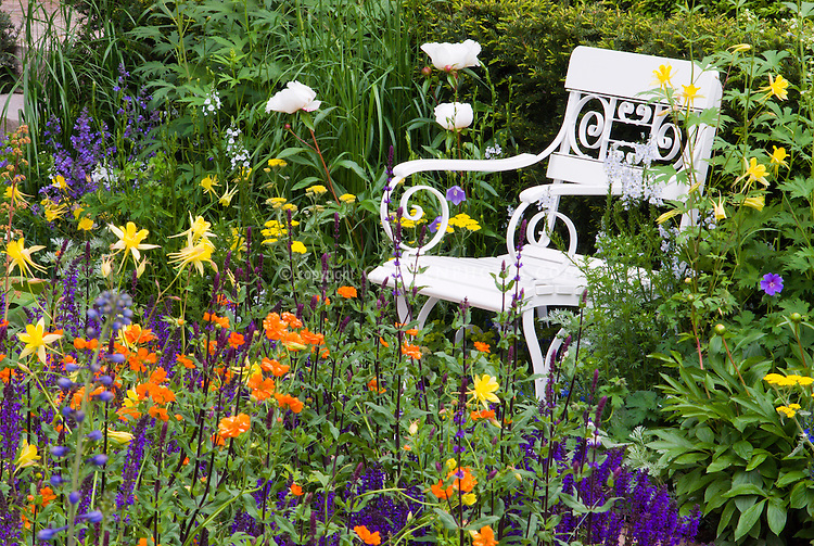 Garden furniture chair in flower bed, Lush garden scene with strong colors, orange, puple, yellow, garden chair, shrubs, peony Paeonia, Aquilgeia columbine, Geum, Salvia, medium view