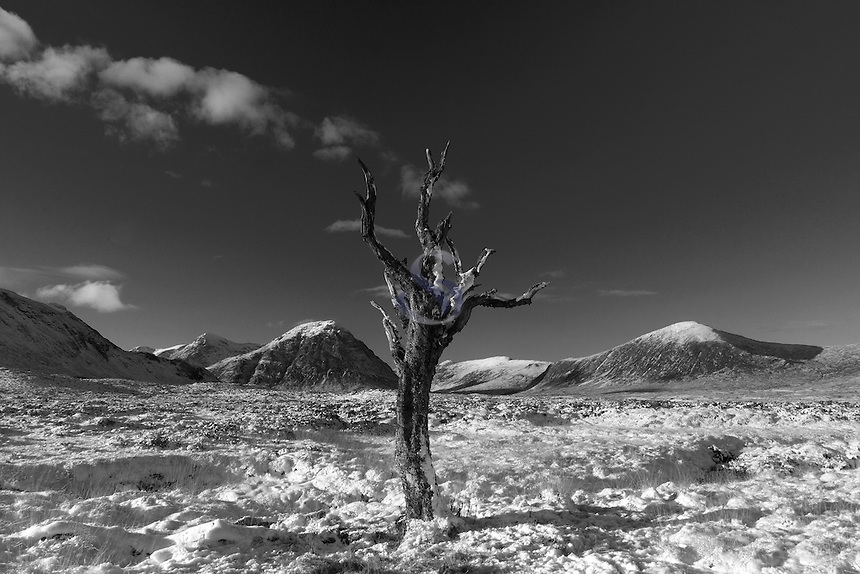 Dead tree on Rannoch Moor looking towards Buachaille Etive Mor and Beinn a Chrulaiste, Glencoe, Highlands
