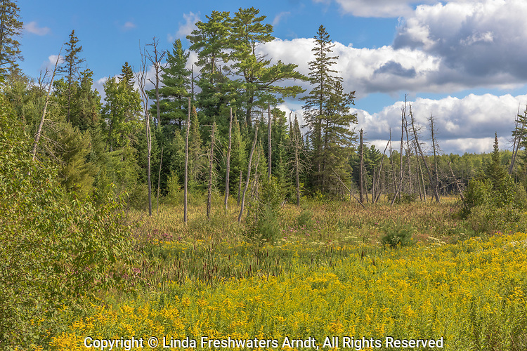 A pretty August day in the Chequamegon National Forest (northern Wisconsin).