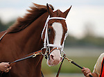September 21, 2013.  Will Take Charge, trained by D. Wayne Lukas and ridden by Luis Saez, wins the Pennsylvania Derby at  Parx Racing, Bensalem, PA.  Will Take Charge enters the paddock before the race. ©Joan Fairman Kanes/Eclipse Sportswire