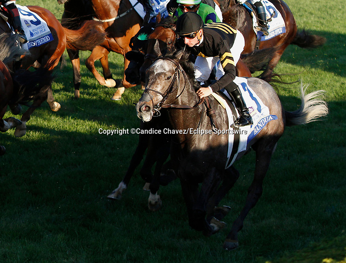 October 05, 2019:  Bandua in the Shadwell Turf Mile at Keeneland Racecourse in Lexington, KY on October 04, 2019.  Candice Chavez/ESW/CSM