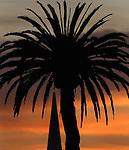 The skies turn a burnt orange just before sunrise in the Presido near Crissy field in San Francisco, California,