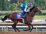 October 26, 2014:  Secret Circle, trained by Bob Baffert, exercises in preparation for the Breeders' Cup Xpressbet Sprint at Santa Anita Race Course in Arcadia, California on October 26, 2014. Scott Serio/ESW/CSM