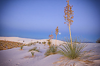 Full Moon and Yuccas - White Sands, New Mexico