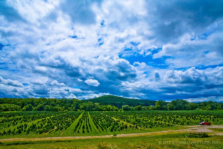White Tree Farm, outside Burlington, Vermont.