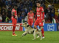 BOGOTA - COLOMBIA - 20 – 05 - 2017: Un perro corre en el campo de juego, durante partido de la fecha 19 entre Millonarios y Patriotas F.C., por la Liga Aguila I-2017, jugado en el estadio Nemesio Camacho El Campin de la ciudad de Bogota. / A dog runs in the field, during a match of the date 19th between Millonarios and Patriotas F.C., for the Liga Aguila I-2017 played at the Nemesio Camacho El Campin Stadium in Bogota city, Photo: VizzorImage / Luis Ramirez / Staff.