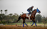 October 23, 2021: Dr. Schivel with Flavien Prat works in preparation for the Breeders' Cup Sprint at Santa Anita Park in Arcadia, California on October 23, 2021. Evers/Eclipse Sportswire/CSM