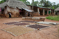Zanzibar, Tanzania.  Cloves drying on mats.