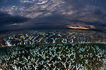 Shallow bleaching corals split level at sunset