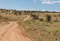 Tanzania.  Serengeti National Park, Northern Serengeti in Dry Season.