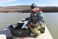 Kody Rudolph looks at a flathead catfish caught in a net during the walleye study. Rudolph is with the Fort Smith Utilities water department. He and co-worker Aaron Freeman helped with the Game and Fish study at Lake Fort Smith.<br />(NWA Democrat-Gazette/Flip Putthoff)