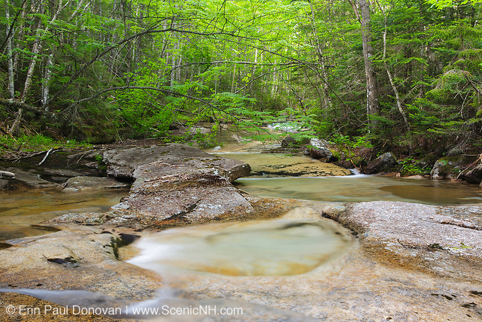 Crystal Brook in the Pemigewasset Wilderness of Lincoln, New Hampshire. This forest was logged during the East Branch & Lincoln Railroad era (1893-1948).