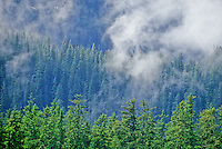 Temperate rainforest of Sitka Spruce and Western Hemlock growing on mountains of Tracy Arm Fords Terror Wildnerness, Tongass National Forest, Alaska, AGPix_0681.