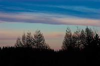 Trees on a ridge are silhouetted against a colourful sky at dusk