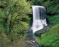 Middle North Falls; Silver Falls State Park, OR