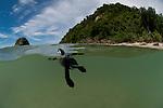 Leatherback sea turtle (Dermochelys coriacea) split level of the beach where the were born