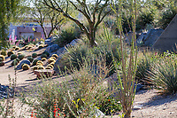 Cactus and Fouquieria splendens Ocotillo on berm by gravel swale, resilient drought tolerant garden at Palm Springs Art Museum in Palm Desert, California
