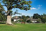 Grossbritannien, England, Hampshire, New Forest, Swan Green; traditionelle weisse Landhaeuser mit Reetdach, Pferdekoppel | Great Britain, England, Hampshire, New Forest, Swan Green; Horse grazing on Village Green with traditional white cottages