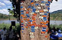 INDIA, Narmada river and dams, reservoir of Narmada dam Sardar Sarovar Project, Narmada Bachao Andolan NBA, movement to save the Narmada, tribal village Domkhedi, tree with name plates of villages which will be submerged in the dam reservoir / INDIEN, Narmada Fluss und Staudaemme, Stausee des Sardar Sarovar Projekt Staudamm, Adivasi Dorf Domkhedi, Baum mit Schildern von Dörfern die im Stausee versinken werden
