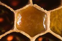 Pollen cell