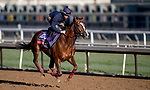 October 30, 2019: Breeders' Cup Filly & Mare Turf entrant Billesdon Brook, trained by Richard Hannon, exercises in preparation for the Breeders' Cup World Championships at Santa Anita Park in Arcadia, California on October 30, 2019. Carolyn Simancik/Eclipse Sportswire/Breeders' Cup/CSM
