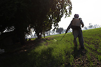 A man sprays pesticides on a field in the Punjab region of northwest India. Scientists believe that excessive pesticide use in the region over the past 30-40 years has led to the accumulation of dangerous levels of toxins such as uranium, lead and mercury which are contributing to increased health problems in rural communities. Many children are now being born for physical and mental disabilities. It's a hidden epidemic which is gripping the Punjab region in northeast India which for decades has been the country's 'bread basket'. Local farmers and their families are now paying the price for the country's 'Green Revolution'.