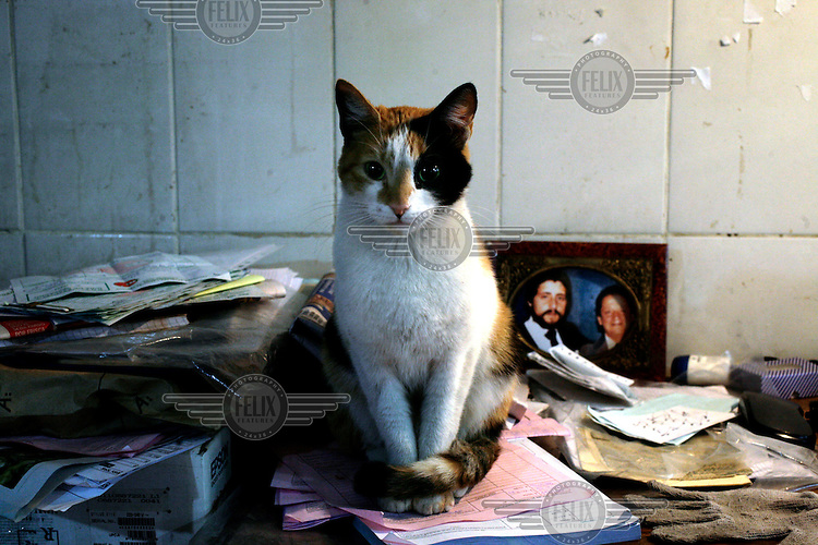 A cat sits among paperwork on a stall holder's desk at the La Vega Central market.