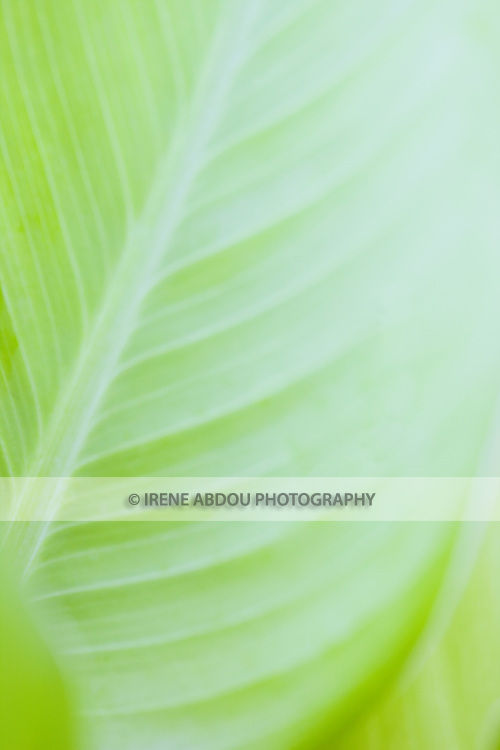 Plant at Longwood Gardens in Kennett Square, Pennsylvania.