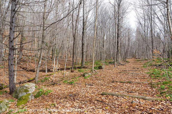 Location of Camp 15 along the old East Branch & Lincoln Railroad (1893-1948) in the Pemigewasset Wilderness in Lincoln, New Hampshire USA. On the left was the landing and work area.
