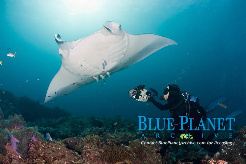 Thomas Peschak photographs reef manta rays, Mobula alfredi, at cleaning station, Manta Point, Lankan, North Male Atoll, Maldives, Indian Ocean