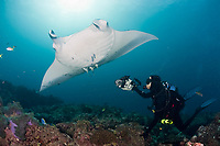 Thomas Peschak photographs reef manta rays, Manta alfredi, at cleaning station, Manta Point, Lankan, North Male Atoll, Maldives, Indian Ocean