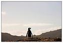 Afrique du Sud<br /> Cap de Bonne Espérance<br /> Manchot