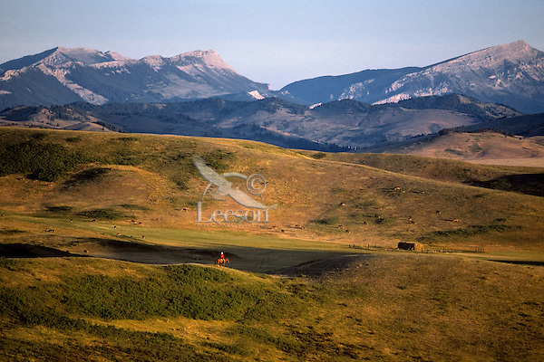 Cowboy riding down ridge in early morning.  Montana (near Augusta).  June.
