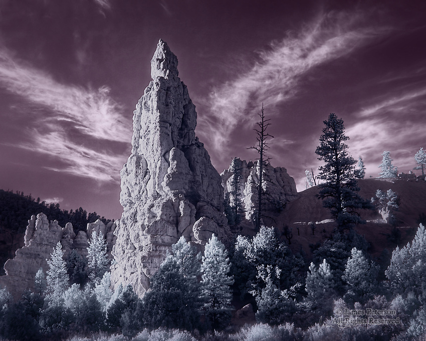 The Queen of Red Canyon (Infrared).  I don't know if this towering sandstone matriarch actually has an official name, but I'm pretty sure that she'll pass for some kind of royalty.  She oversees a stretch of Utah's wondrous Highway 12, east of the town of Panguitch, and her coniferous subjects positively glow with adoration and reverence for her (at least they do in the infrared part of the spectrum).<br /> <br /> Image ©2021 James D. Peterson