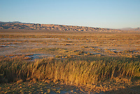 Early morning light on the marsh at Saratoga Spring, Death Valley National Park, California