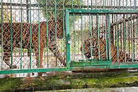 Laos Tiger Farms