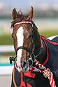 Horse Racing: Osaka Hai at Hanshin Racecourse