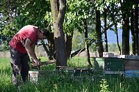 ROMANIA Transylvania, Arpasu de Sus, bee keeping  / RUMAENIEN Transsilvanien Siebenbuergen, Arpasu de Sus, Bienenzucht