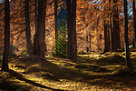 Italien, Suedtirol (Trentino - Alto Adige), St. Martin in Thurn - Ortsteil und Bergsteigerdorf Campill im Campilltal: Waldweg | Italy, South Tyrol (Trentino - Alto Adige), Campill Valley (Val di Longiarù): mountain village Campill (Longiarù) - forest track