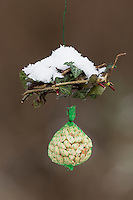 Selbstgemachtes Vogelfutter, Vogelfütterung, Fütterung, Nuss-Säckchen, Nusssäckchen, Nuß-Säckchen, Nussäckchen, Erdnüsse, Erdnuss-Säckchen, Erdnusssack, Winterfütterung, bird's feeding