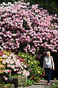 22/05/16 <br /> <br /> Hannah Clark, 28, from Leicestershire.<br /> <br /> Enjoying the rhododendrons and azaleas in full bloom in the spring sunshine at Lea Gardens near Matlock in the Derbyshire Peak District.<br /> Owner, Pete Tye said the brightly coloured rhododendrons are the best they have ever been this year.<br /> All Rights Reserved: F Stop Press Ltd. +44(0)1335 418365   +44 (0)7765 242650 www.fstoppress.com