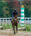October 2, 2020: as horses prepare for the Preakness Stakes at Pimlico Race Course in Baltimore, Maryland. Scott Serio/Eclipse Sportswire/CSM