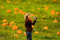The annual hunt for the great pumpkin -- or at least a pumpkin suitable for carving into a spooky Halloween jack-o-'lantern -- took place in October 2009 at Carrigan Farms, located north of Charlotte, NC, in Mooresville, North Carolina. The fifth-generation farm offers Halloween pumpkin seekers an opportunity to tromp through their vine-filled pumpkin fields and even pull home-grown pumpkins right off the vine. Carrigan Farms also gives hayrides and fresh apple cider during pumpkin-hunting season each autumn.