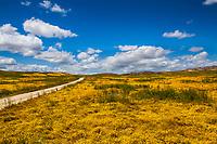California spring wildflower superbloom, Carrizo Plains National Monument, California