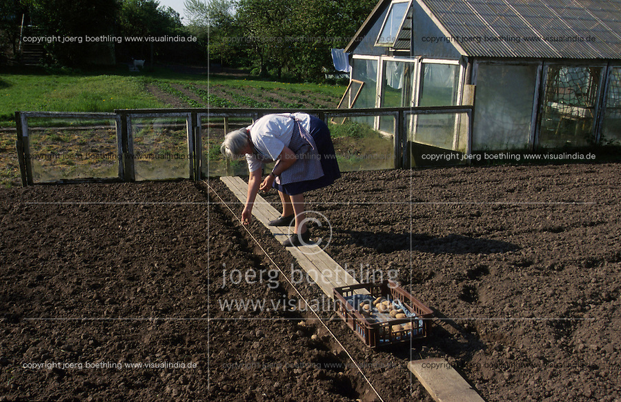 GERMANY, woman plant potato in garden / DEUTSCHLAND Pellworm, Frau bei Kartoffel Ausaat im  Garten