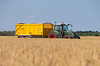 16-7-2021 Tractor and trailer carting Spring Barley<br /> ©Tim Scrivener Photographer 07850 303986<br />      ....Covering Agriculture In The UK....